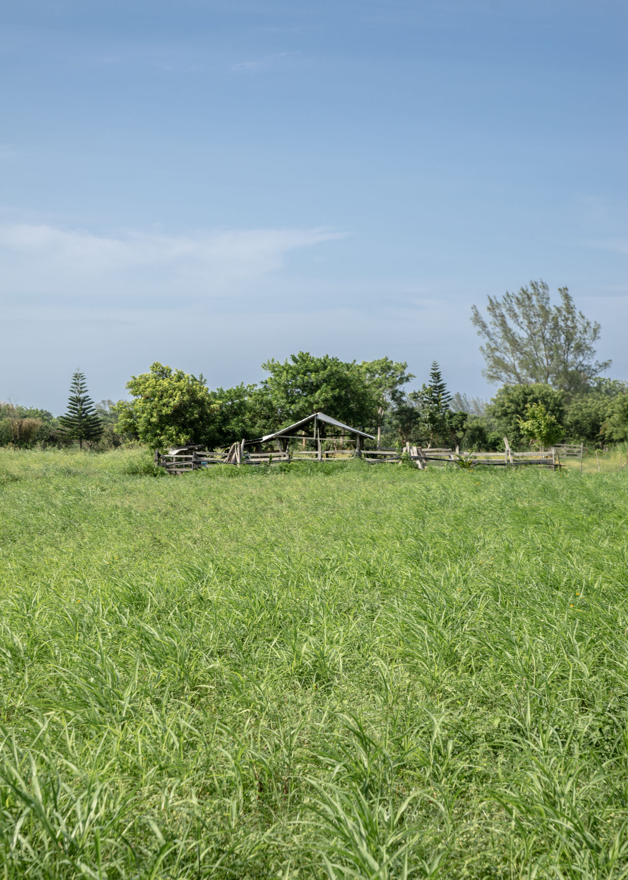 Agriculture Banana Tree Beauty In Nature Day Field Grass Green Color Growth Landscape Landscape_Collection Nature Nature Nature Photography Nature_collection No People Outdoors Rural Scene Scenics Sky Tranquil Scene Tranquility Travel Travel Destinations Tree Veracruz Neighborhood Map