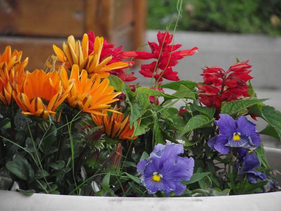 The Purist (no Edit, No Filter) Flower Collection Flowerporn Flowers,Plants & Garden Colours Of Nature ılgaz