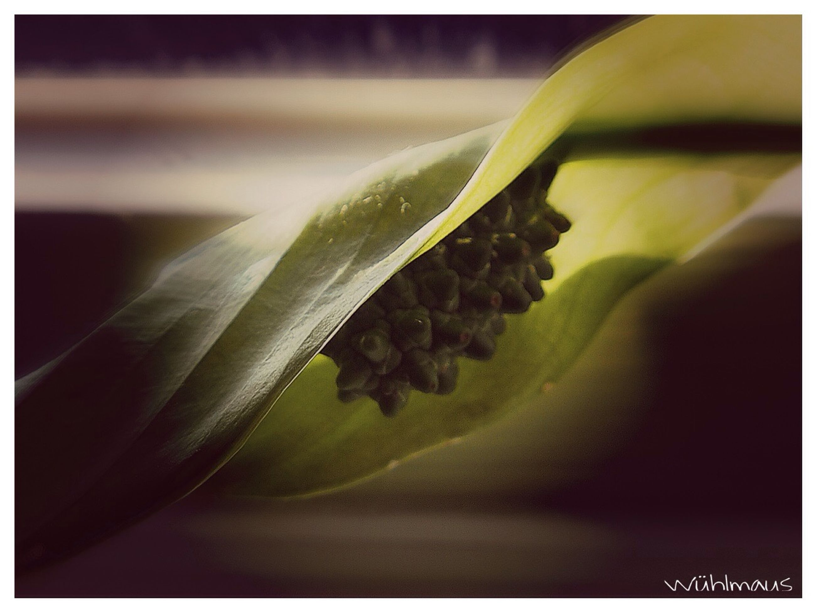 transfer print, close-up, auto post production filter, freshness, growth, nature, selective focus, green color, leaf, focus on foreground, beauty in nature, no people, plant, indoors, studio shot, day, detail, fragility, natural pattern
