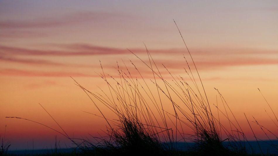 Silhouette Grass Sunset
