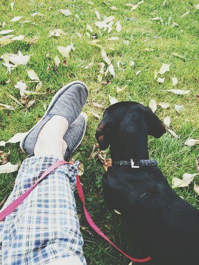 Enjoying Life Hanging Out Goliath Dog