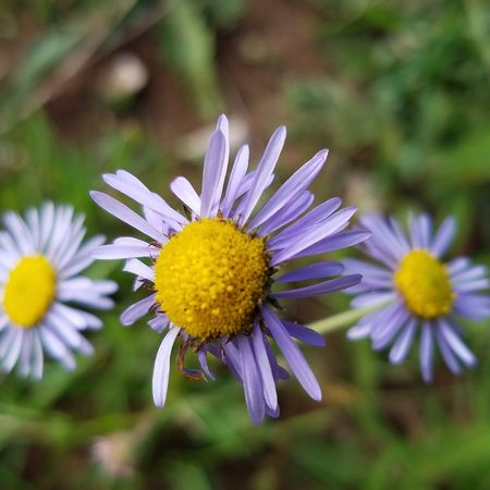 Flower Nature Beauty In Nature Outdoors Purple