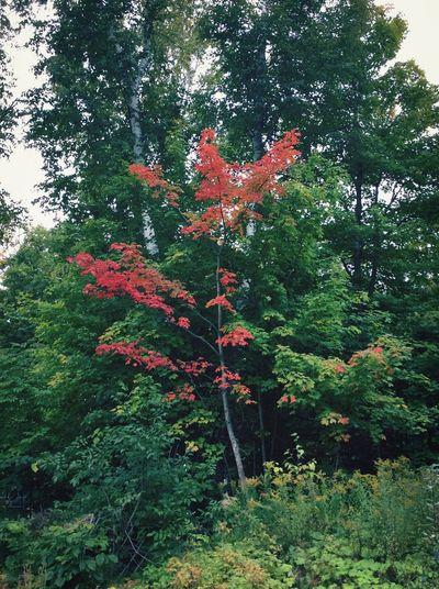 Tree Fall Autumn Colors