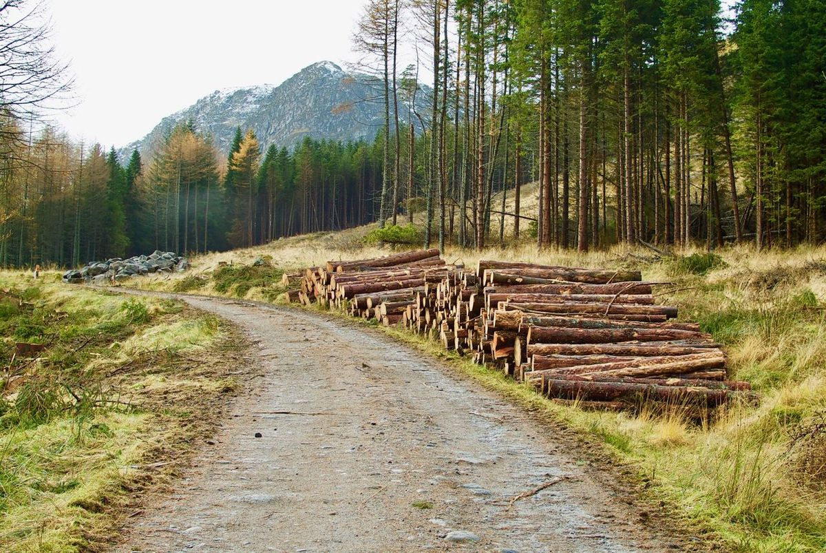 Glen Clova. Tree Nature Forest Outdoors No People Glen Glen Clova Glen Clova Scotland Forestwalk Forestry Forestry Industry Forest Path Forestry Commission Logs The Great Outdoors - 2017 EyeEm Awards