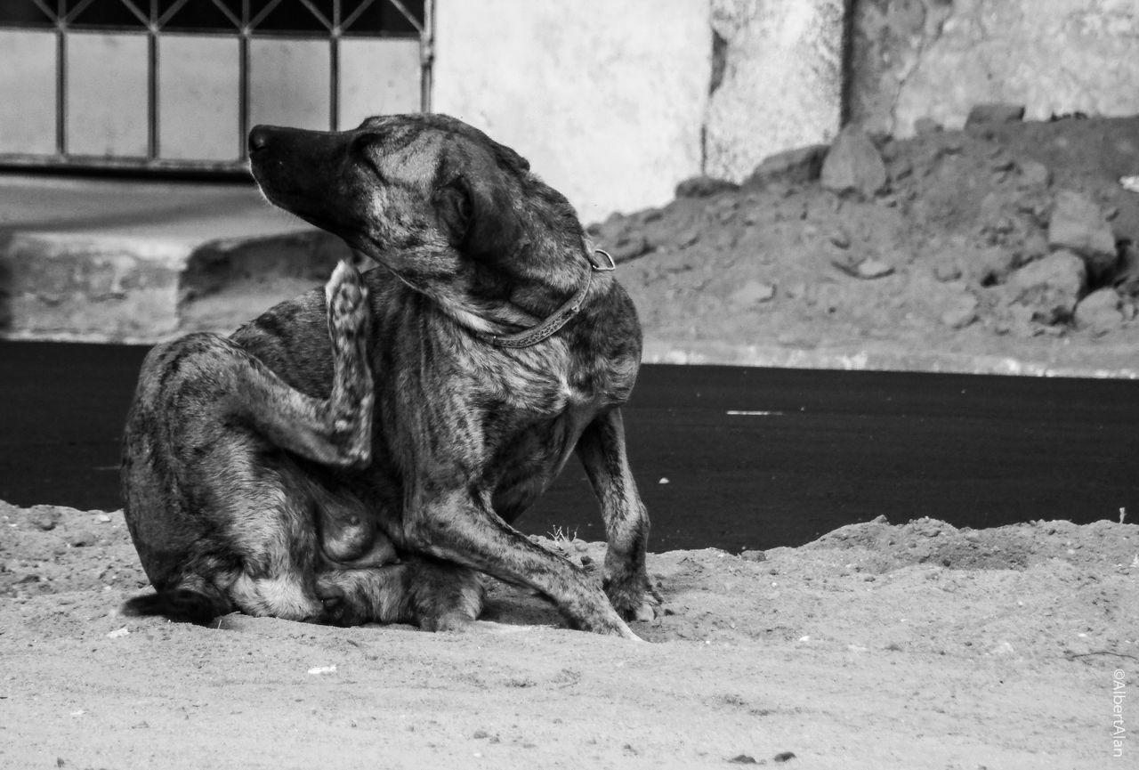 Close-Up Of Dog Sitting On Sand