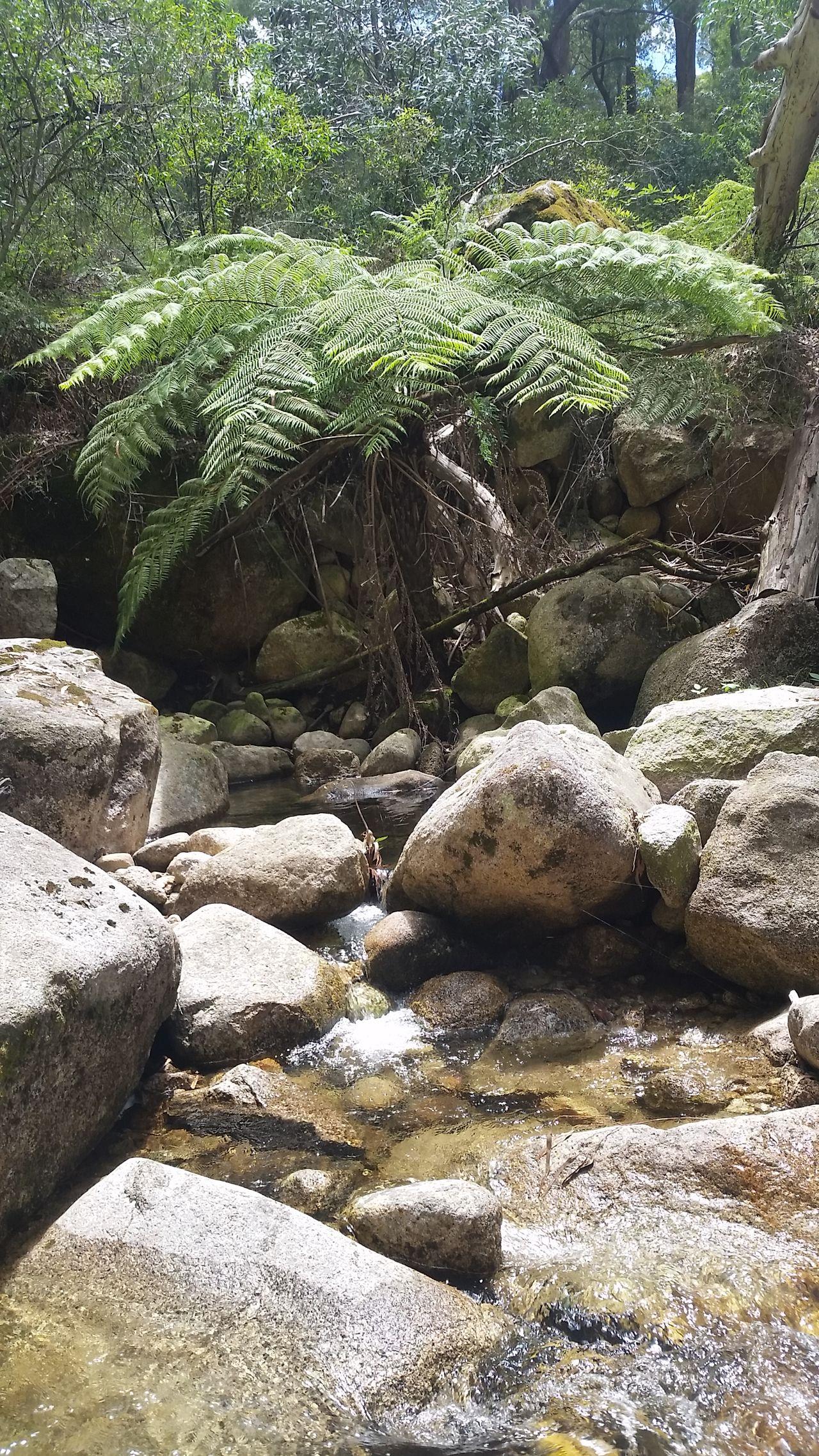 Tree Fern Mountain Stream Australian Landscape Australian Bush