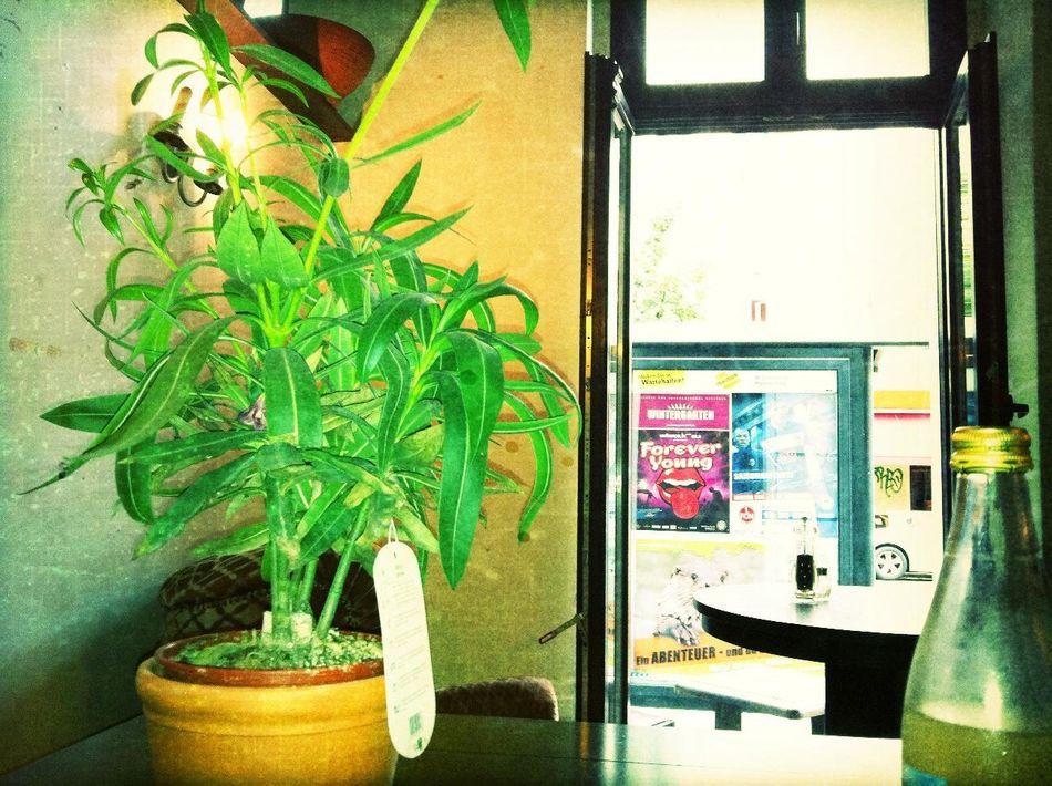 eating at Pasta Presti Eating