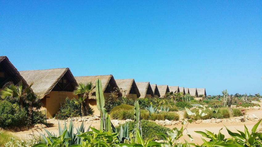Dakhla West Point hotel, Morocco Dakhla West Point EyeEm Selects Agriculture Sunny Outdoors Field Rural Scene Clear Sky No People Day Blue Landscape Nature Growth Sky Scenics Plant Architecture Tree Beauty In Nature Built Structure Building Exterior Grass