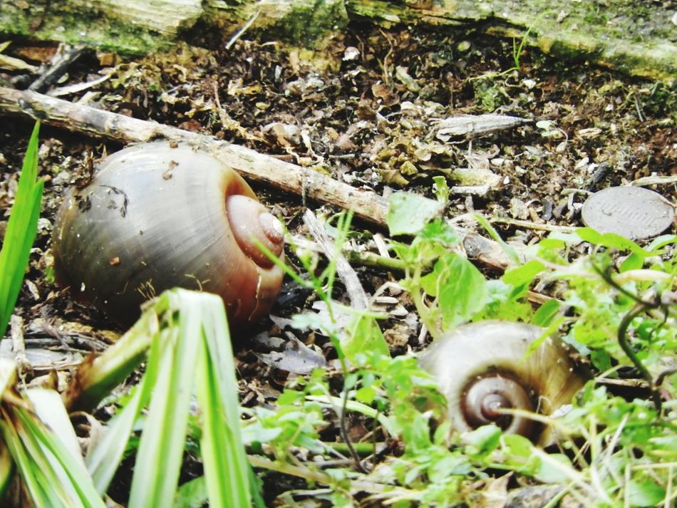 Nature Grass Outdoors Field Close-up Day Abandoned Water Social Issues No People Animal Wildlife Animals In The Wild Animal Themes Animal The Week Of Eyeem EyeEmNewHere Snail Snail Shells Snail🐌 Beauty In Nature Tranquility Green Color Nature