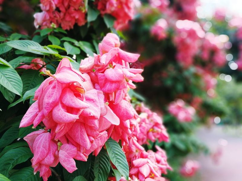 Pink Color Plant Flower Nature Growth Beauty In Nature Close-up Outdoors Fragility Leaf Flower Head Freshness day First Eyeem Photo