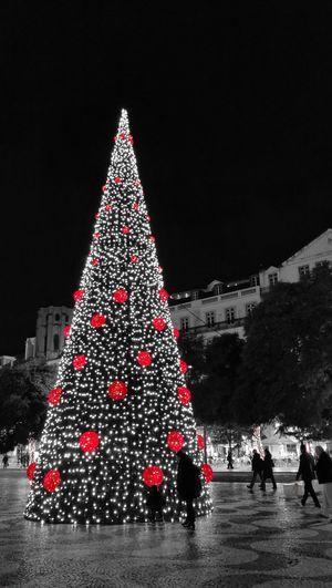Natal Christmas Tree Christmas Lights Tree Tradition Christmas Ornament Illuminated Outdoors Portugal Lisboa Lisbon Lisbonlovers Cml Cmlisboa HuaweiP9 P9 Huawei P9photography Capturedonp9 Huaweiphotography Leica Lens