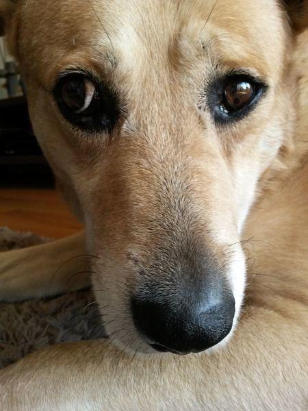 Dog Pets Domestic Animals Close-up Animal Eye Pets Of Eyeem Dog Love Dogs Of EyeEm Bastian BYOPaper!