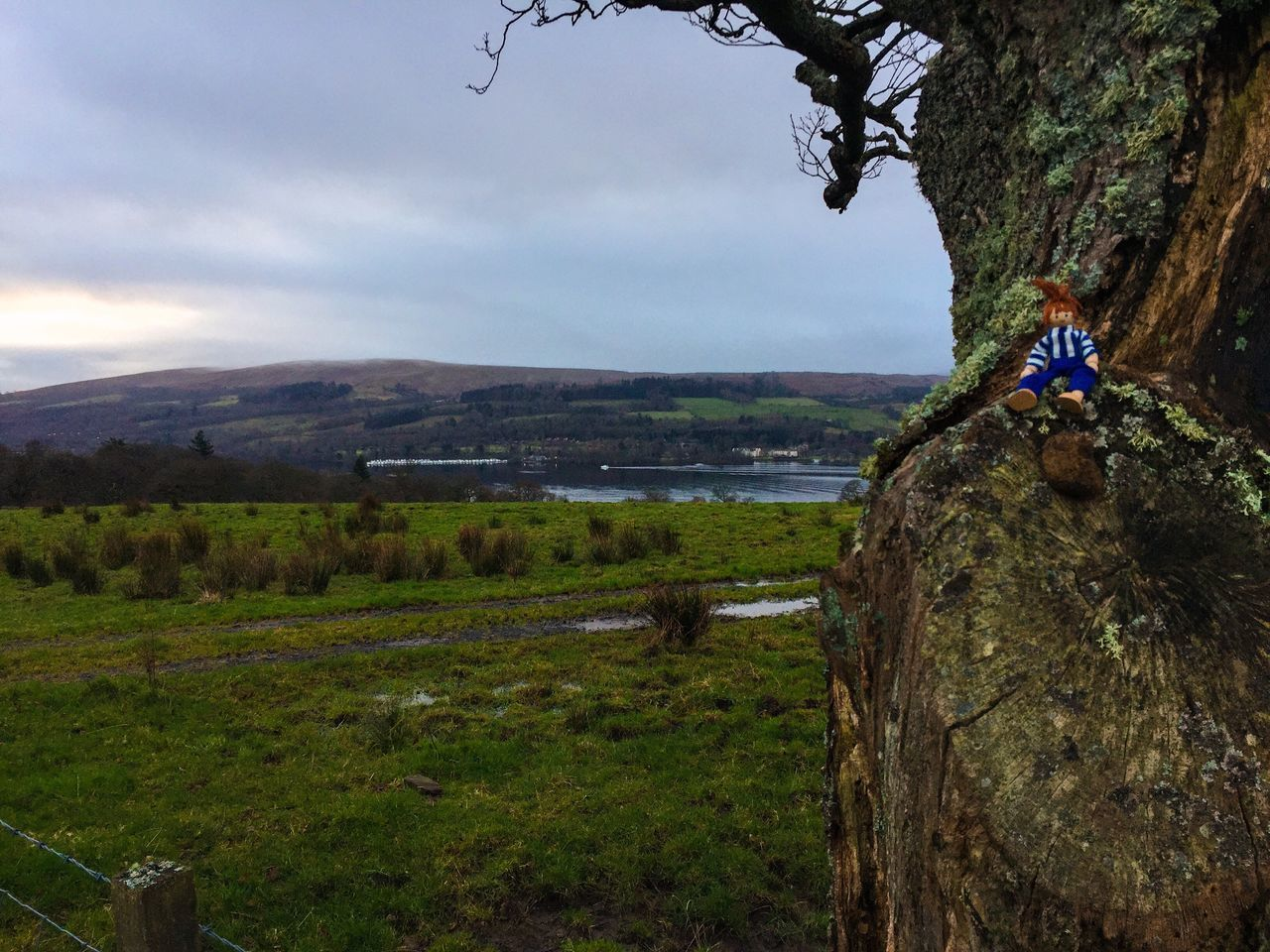 My boy climbing trees, needed a rest 😀 Horizon Over Land Water Mountains Today In Scotland Day Beauty In Nature Countryside Nature Scenics Landscape Tranquil Scene Tree Green Grassy MyBoy Fun Messing Around