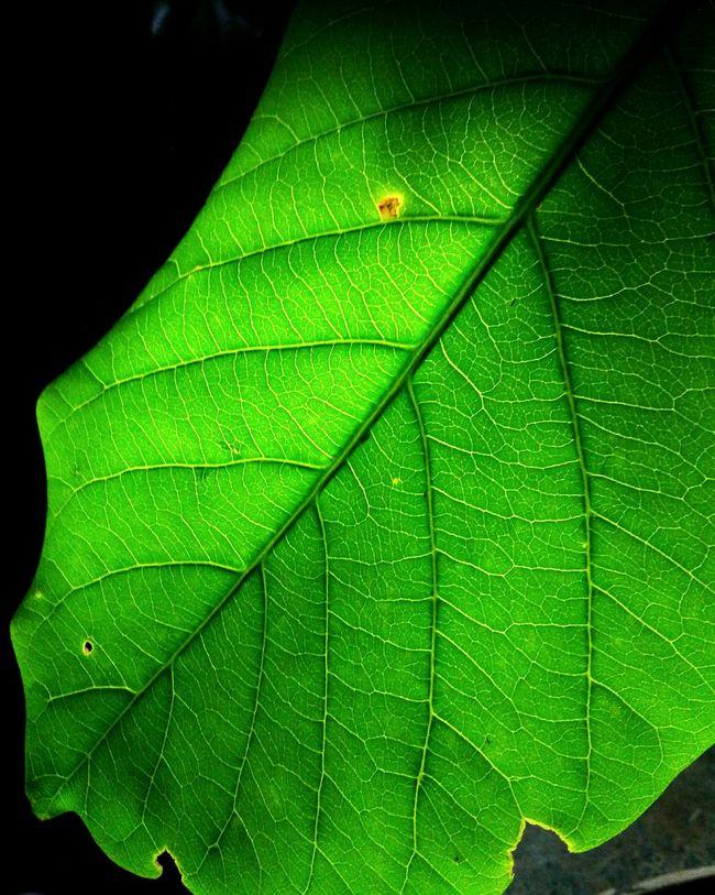 Lifeline Green Nature On Your Doorstep