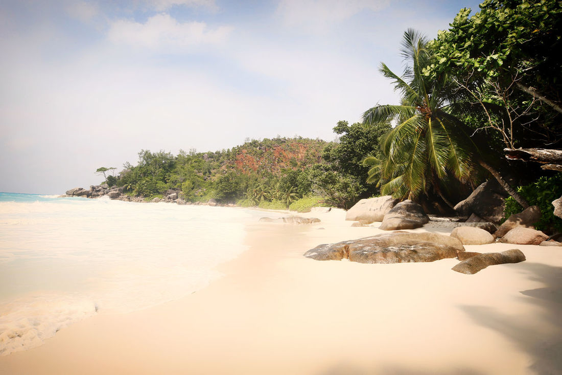 Praslin Seychelles Islands Beach Beauty In Nature Day Nature No People Outdoors Palm Tree Praslin Praslin Seychelles Sand Scenics Sea Seychelles Seychelles Islands Sky Tranquility Travel Destinations Travel Photography Tree Water Anse Georgette