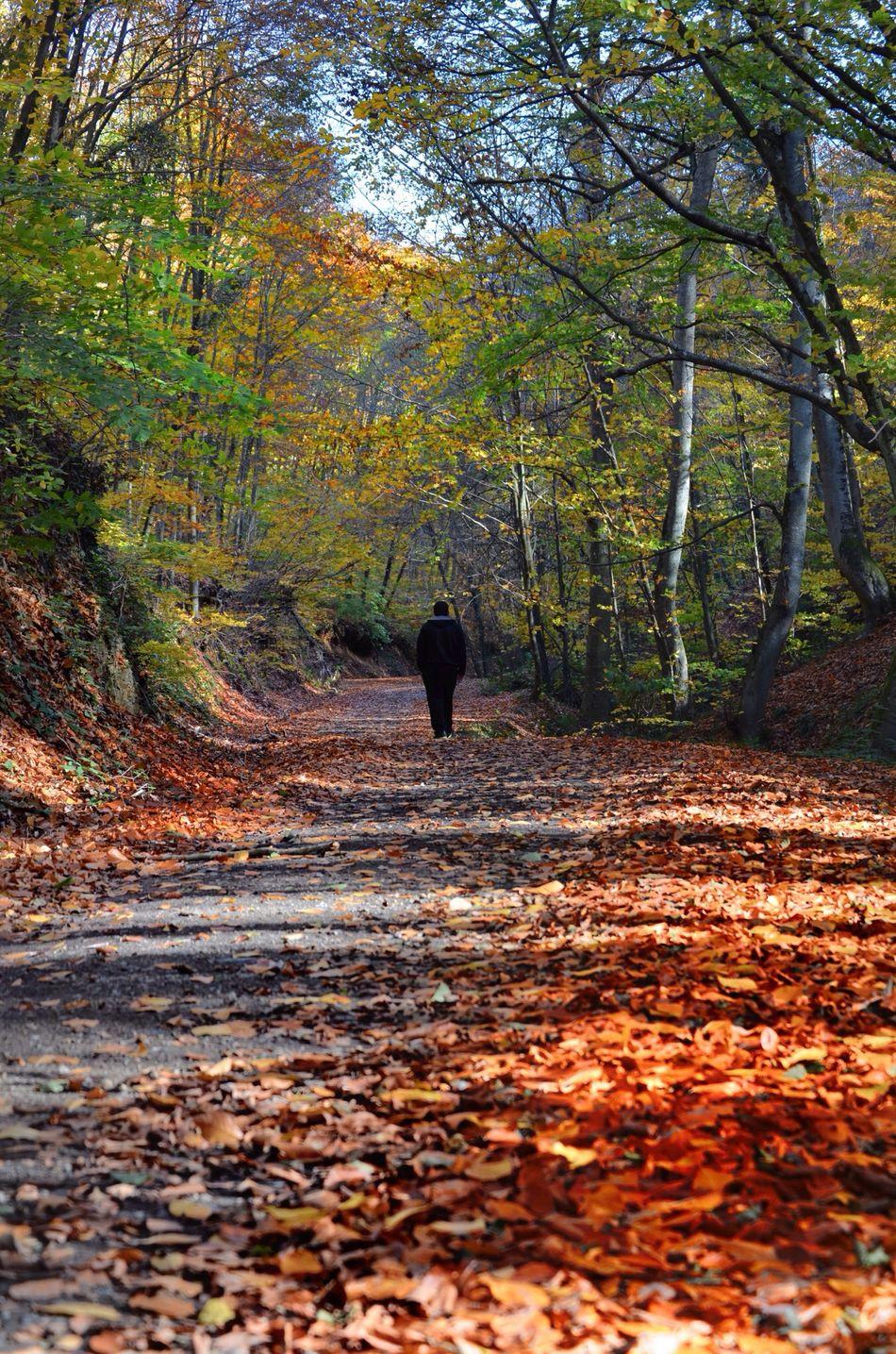 Happy Sunday!! iyi pazarlar ! Autumn leaves... Hanging Out EyeEm Best Shots - Landscape EyeEm Nature Lover Landscape_Collection
