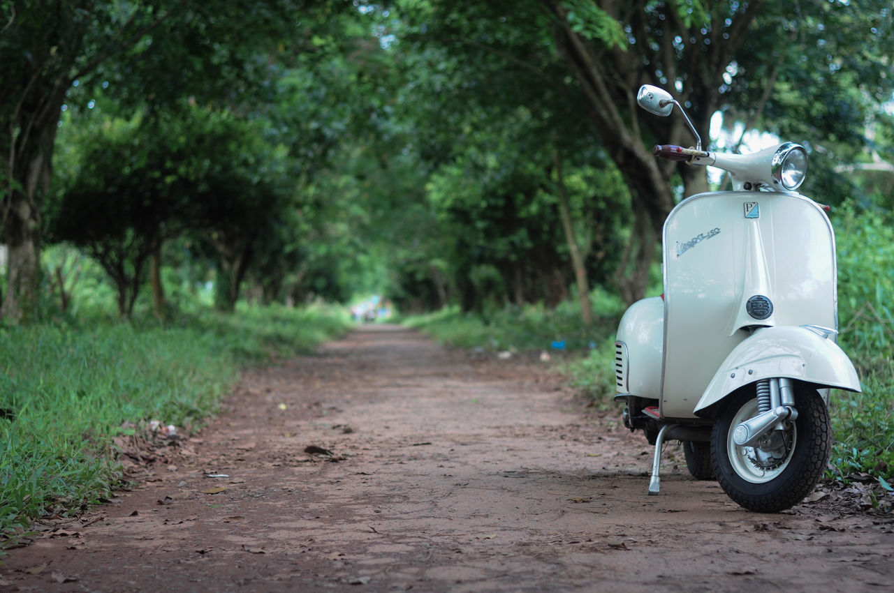 Vespa Tree Land Vehicle Outdoors Rear View Nature No People Day Transportation Vespa Ride Classic Scooter Motorcycle Photography Motorcycles Naturelovers Street Road