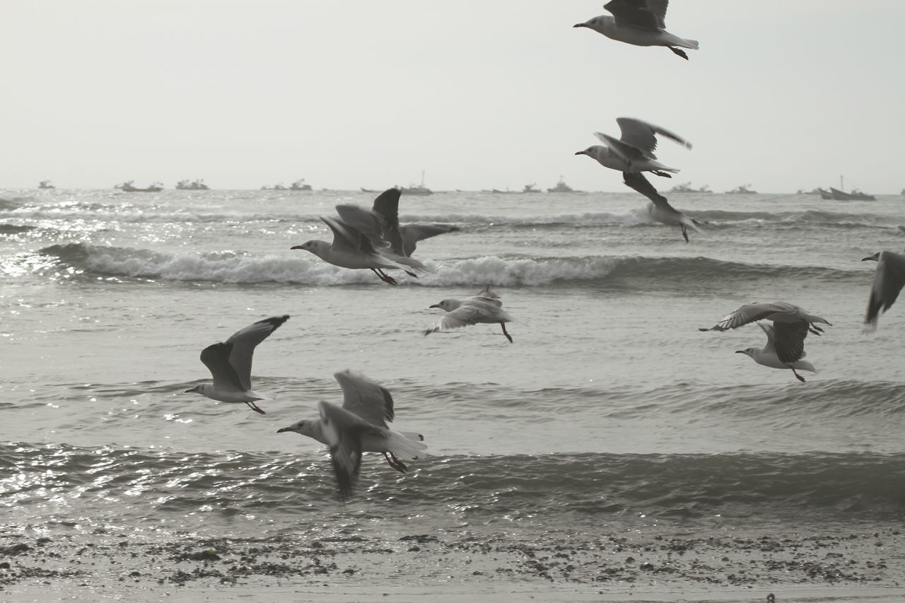 Bird Animals In The Wild Flying Animal Wildlife Animal Behavior Spread Wings Beach Animal Themes Fighting Large Group Of Animals Sea Power In Nature Outdoors Canoneos550d Eyeemphotography EyeEm Best Shots - Nature EyeEmBestPics Indoorsphotography Peru Traveling Pimentel Black And White Ocean Sauvages Animals Walking Around The City  Canonphotography