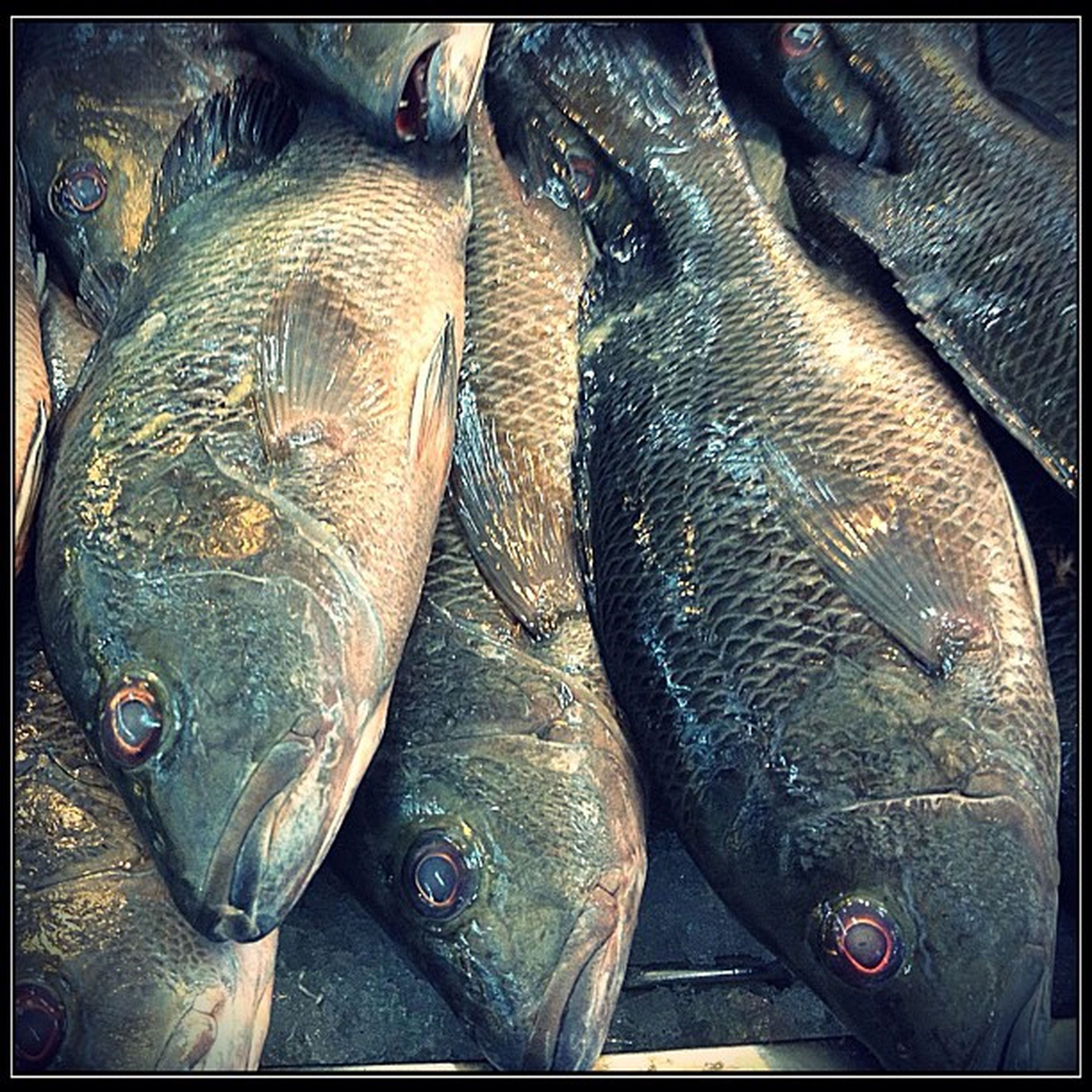 animal themes, indoors, transfer print, fish, seafood, dead animal, close-up, auto post production filter, one animal, retail, for sale, food and drink, food, fish market, animal head, animal body part, sale, healthy eating, market, market stall