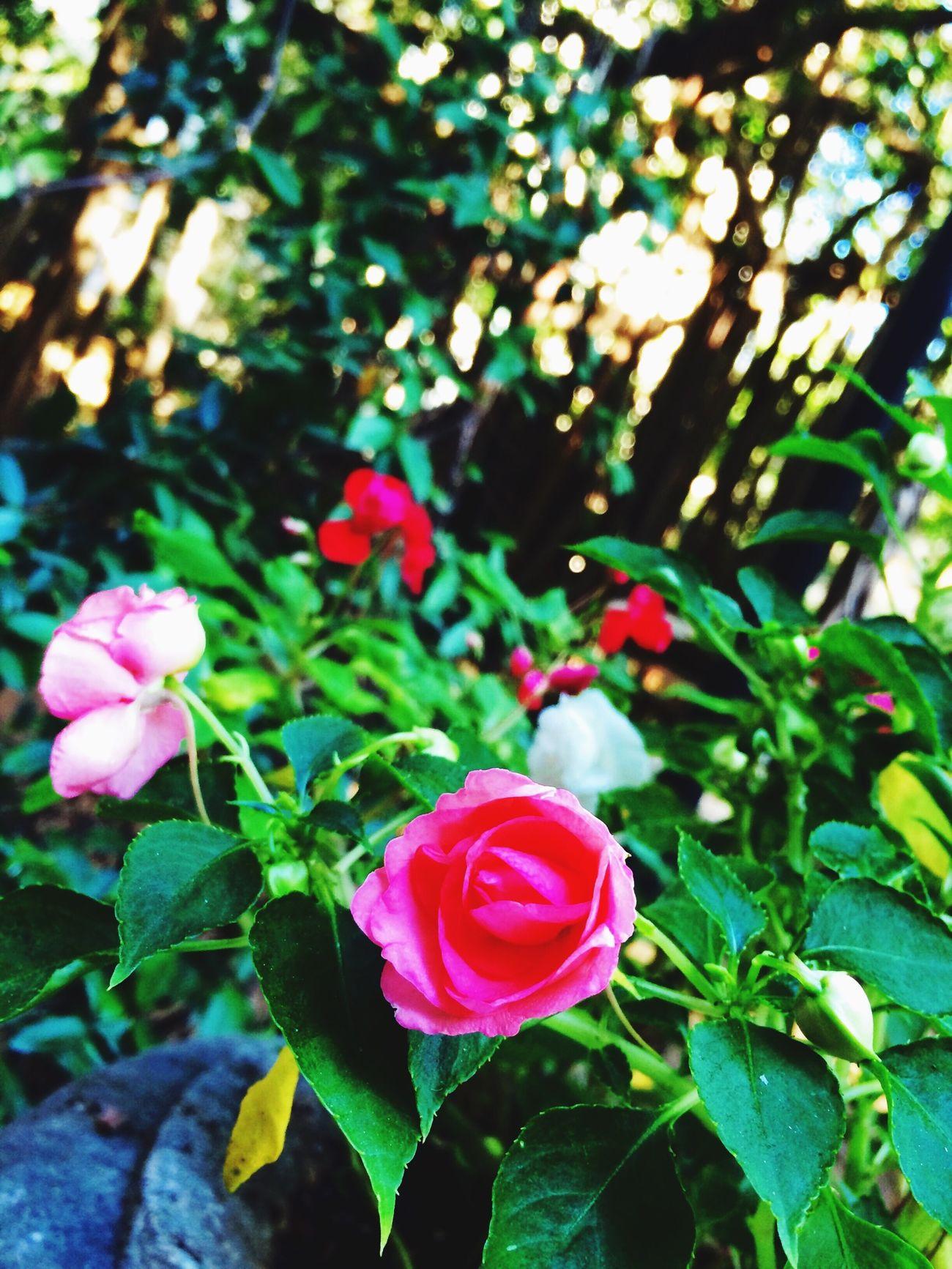 ?☀️ Flowers Flowerporn Garden Green