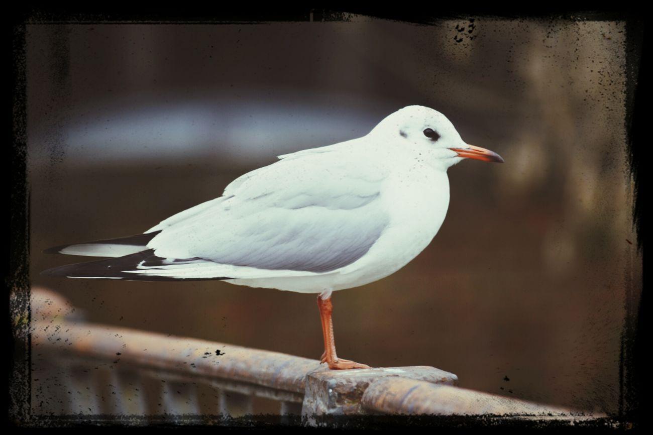 Animals Birds First Eyeem Photo