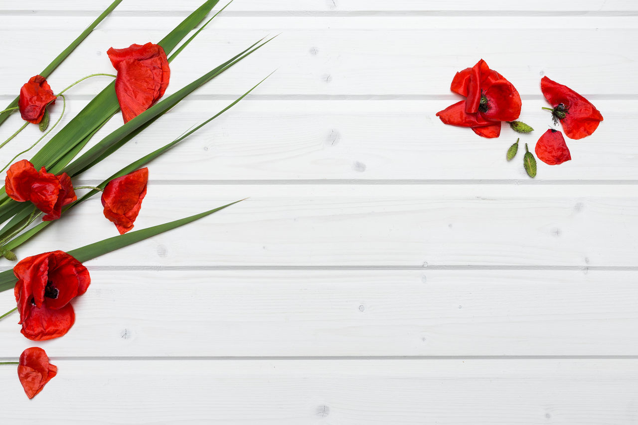 Poppies on a ship deck tabletop Flower Flower Head Fragility Freshness Mockup Mockup Scene Nature No People Plant Poppies  Poppy Flowers Red Ship Deck Tabletop Table Tabletop Scene Wood - Material