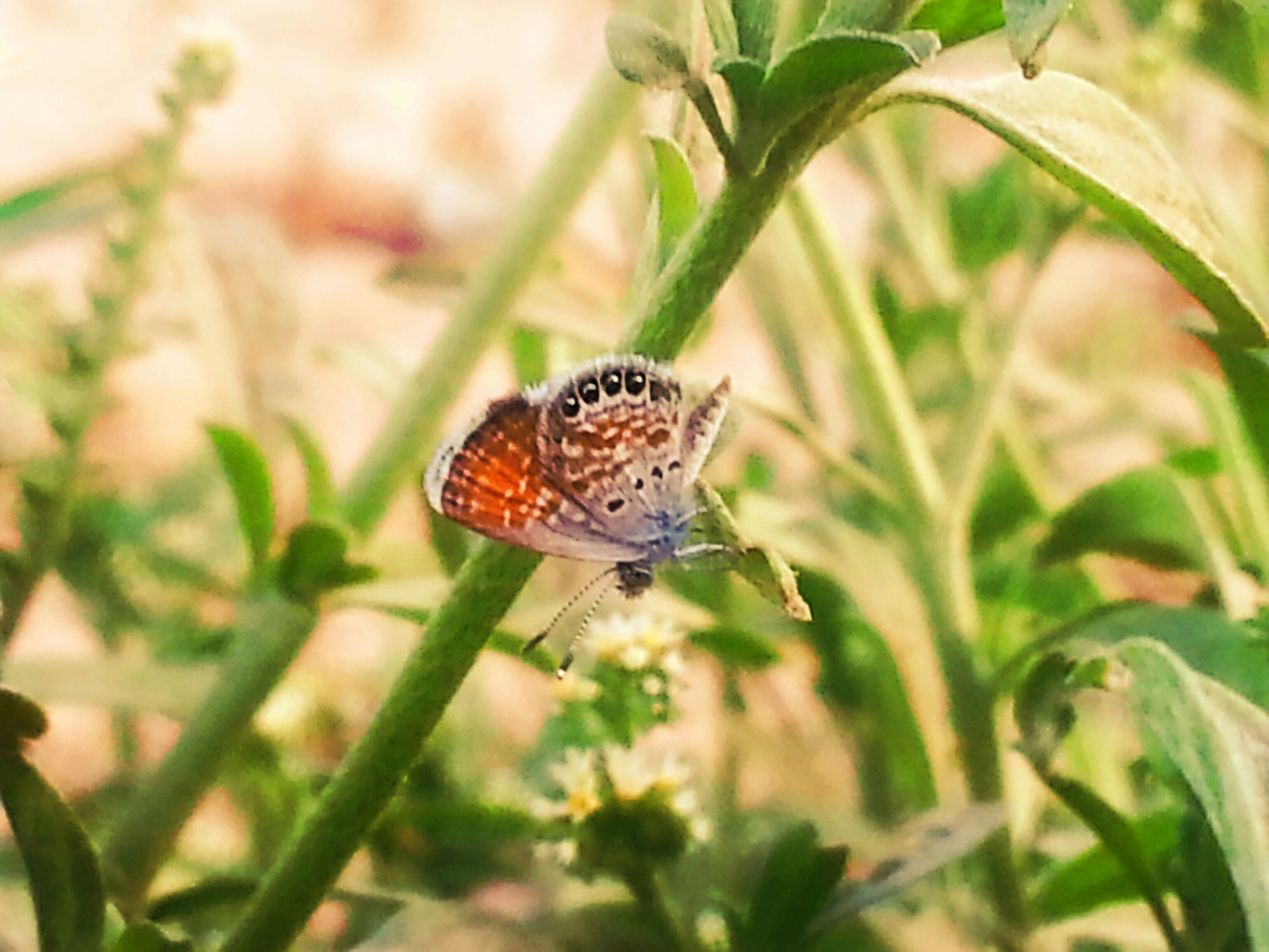 one animal, animal themes, animals in the wild, wildlife, insect, butterfly - insect, plant, leaf, close-up, butterfly, focus on foreground, nature, growth, green color, beauty in nature, natural pattern, flower, animal markings, fragility, outdoors