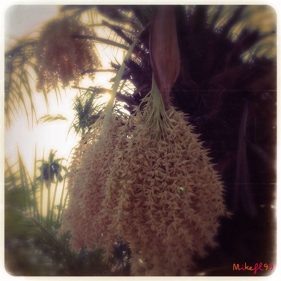 Palm tree seeds. Relaxing Check This Out Mikefl99 Nature