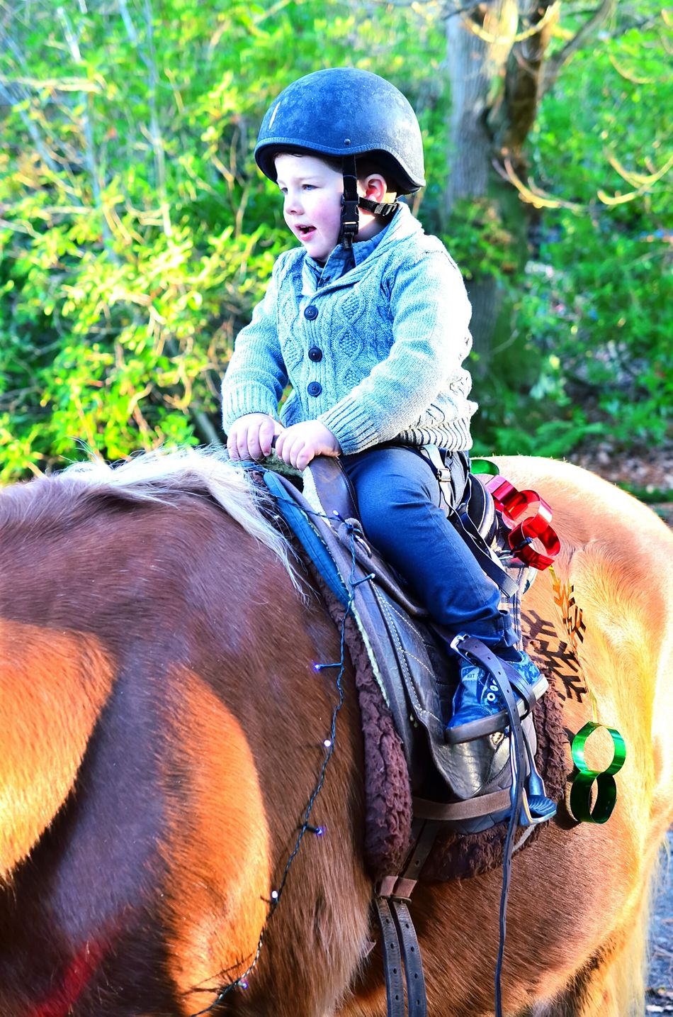 Horse Outdoors Togetherness Leisure Activity Happiness Kelburn Kelburncastle Christmastime Nikon Check This Out Nature Portrait 40mmlens
