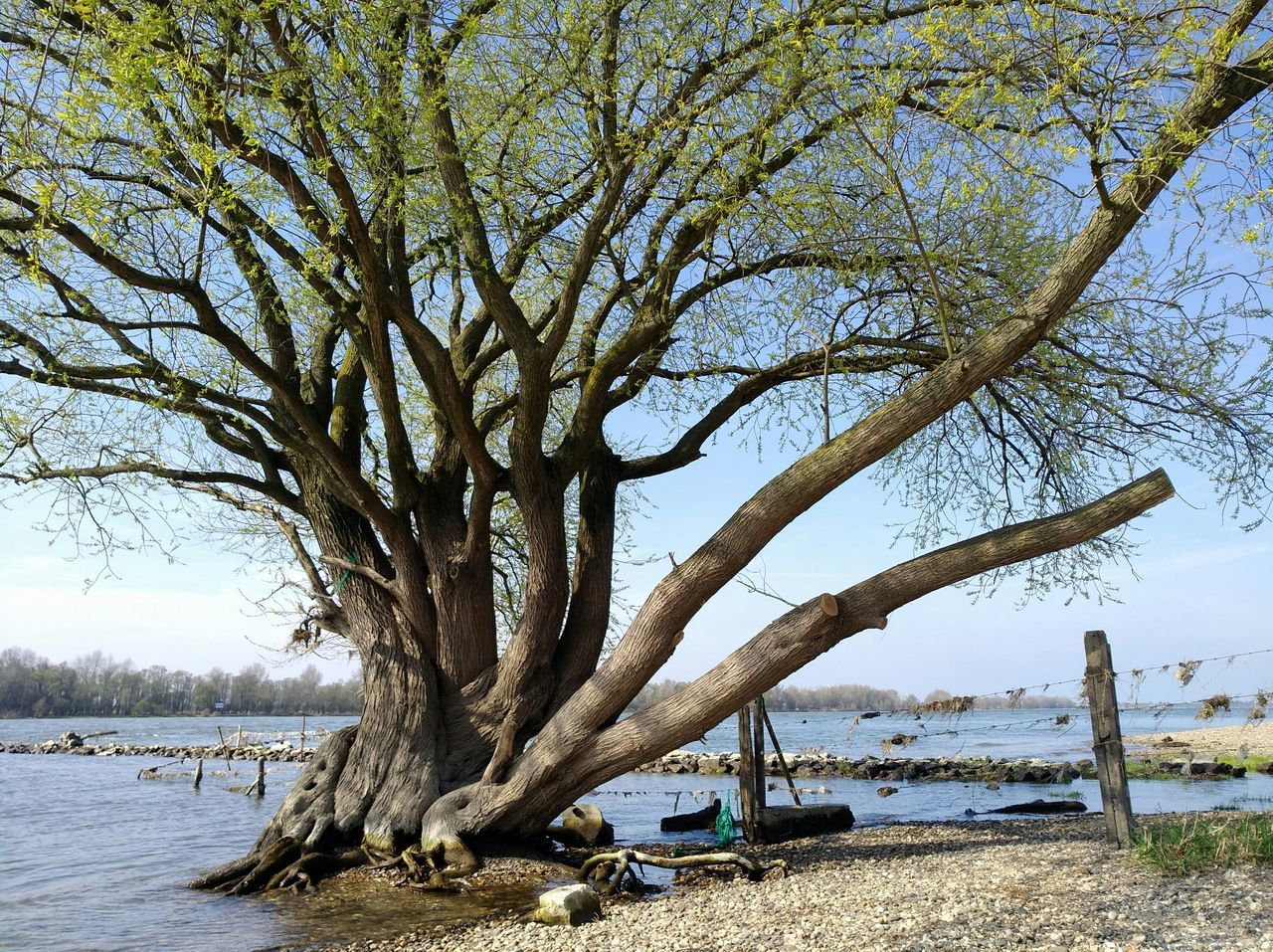 Tree Sea Nature Water Beauty In Nature Sky No People Horizon Over Water Tranquility Scenics Outdoors Beach Branch Tranquil Scene Day We Are Photography, We Are EyeEm Spring Into Spring Spring Has Arrived Spring Springtime Beauty In Nature Tree Landscape Melancholic Landscapes