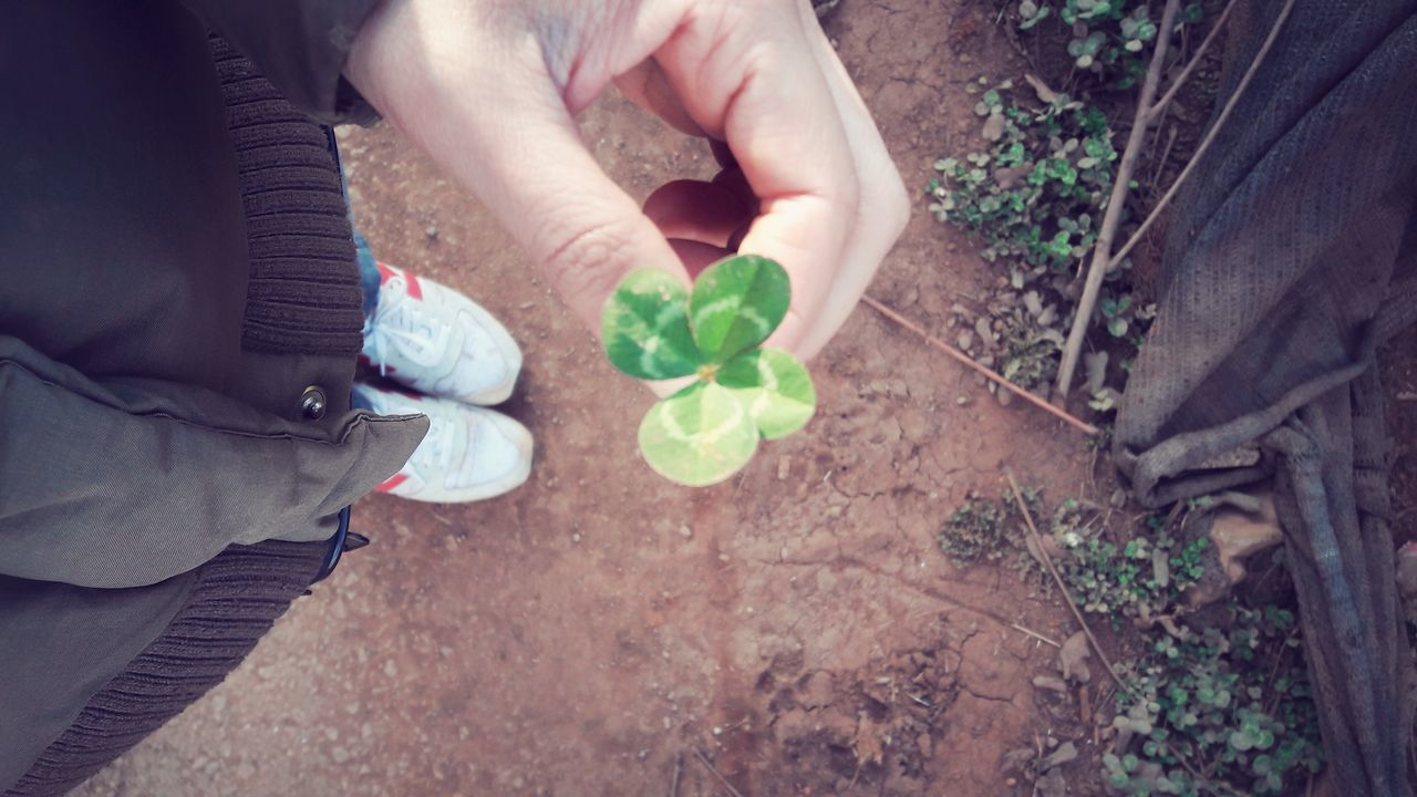 human body part, plant, high angle view, human hand, leaf, one person, love, growth, real people, outdoors, lifestyles, holding, day, low section, men, close-up, nature, flower, fragility, people, freshness, adult, adults only