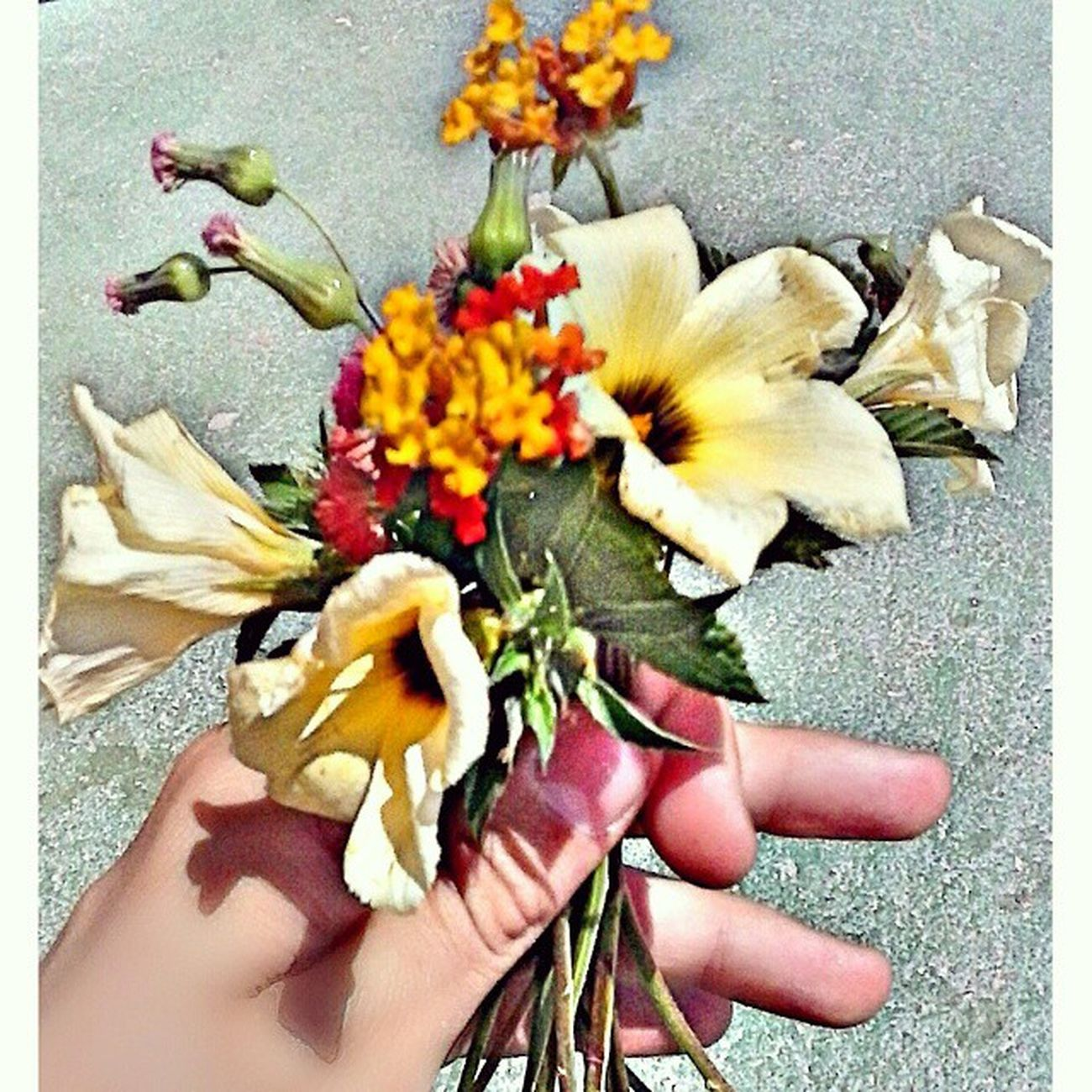 As mais Perfeitas vem das Pessoas mais Especiais ... Flores