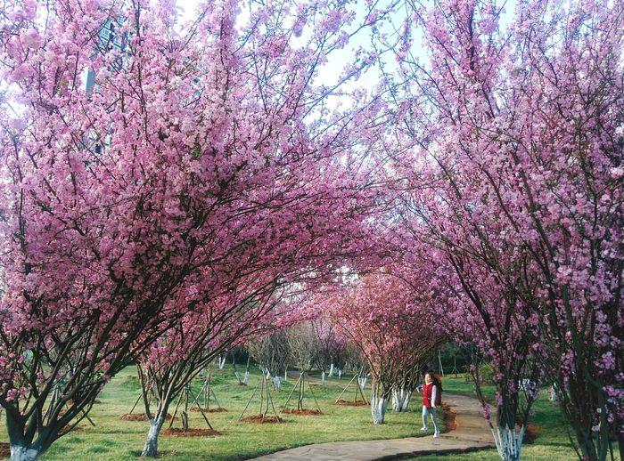 Spring is coming. Spring Flowers Spring Kunming China