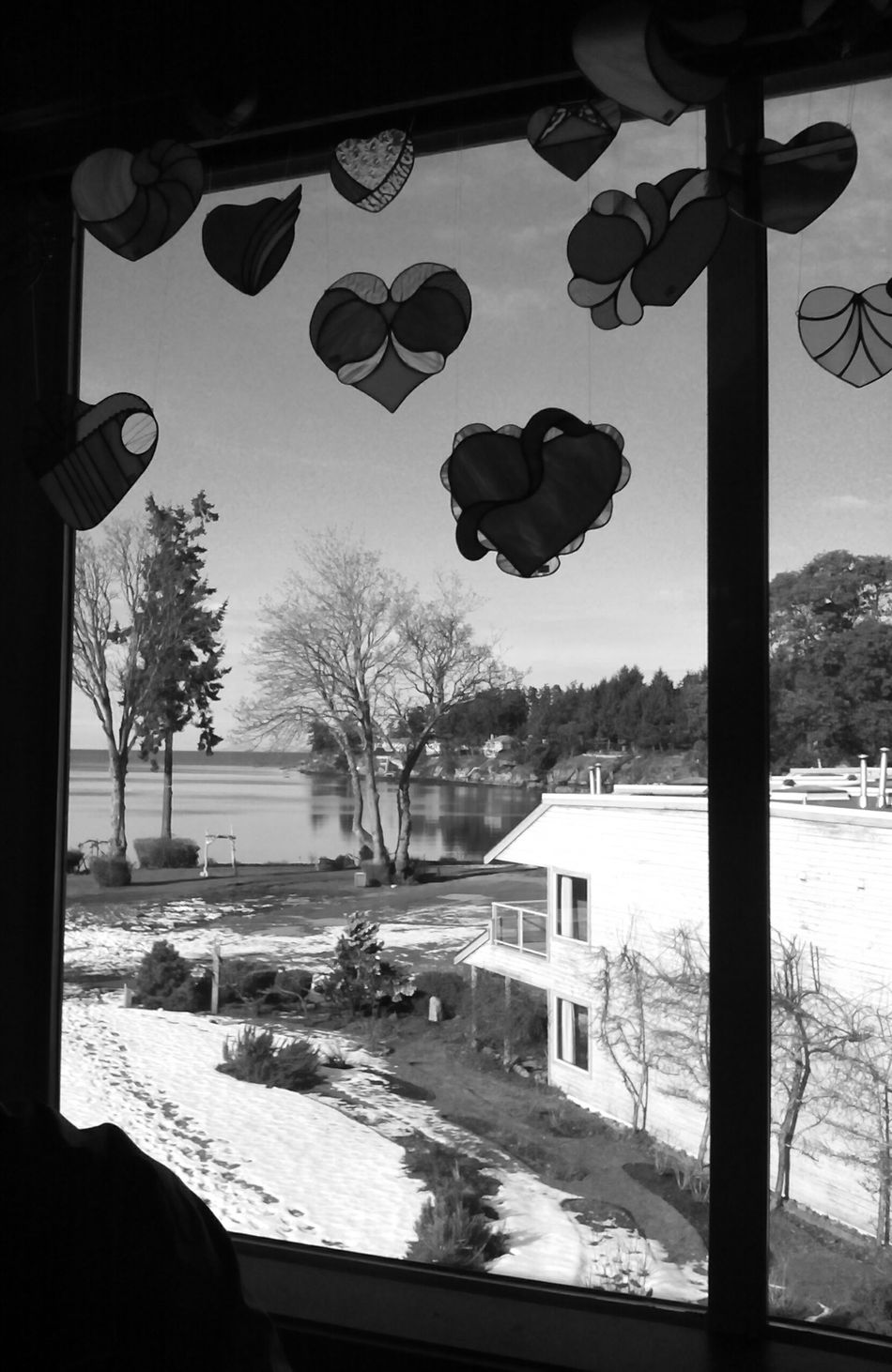 Valentines Day ❤ Hearts♡hearts Black And White Photography Silhouette Window Frame Vancouver Island Canada Canada Photos Natural Lighting Photography Sky Palm Tree Water No People