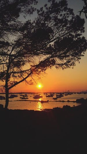 Formentera Sunset Beauty In Nature Scenics Nature Water Tranquility Tree Tranquil Scene Silhouette Reflection Sun Sky Sea Idyllic Orange Color Outdoors Beach Horizon Over Water No People