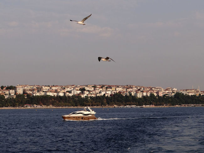 Two flying gulls and a speed boat in front of the skyline of Istanbul A Birds Eye View Animals In The Wild Bird Birds Blue Coastline Day Flying Gull Istanbul Mid-air Mode Of Transport Nature Nautical Vessel Outdoors Sea Ship Sky Skyline Speed Boat Town Transportation Turkey Two Is Better Than One Water