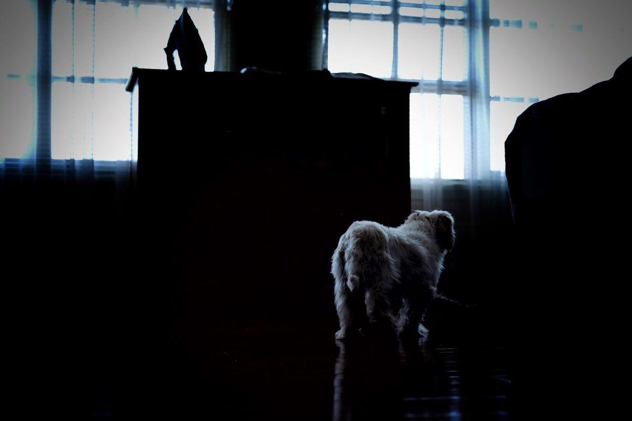 Dog Pets Silhouette FUJIFILM X-T10 35mm F2
