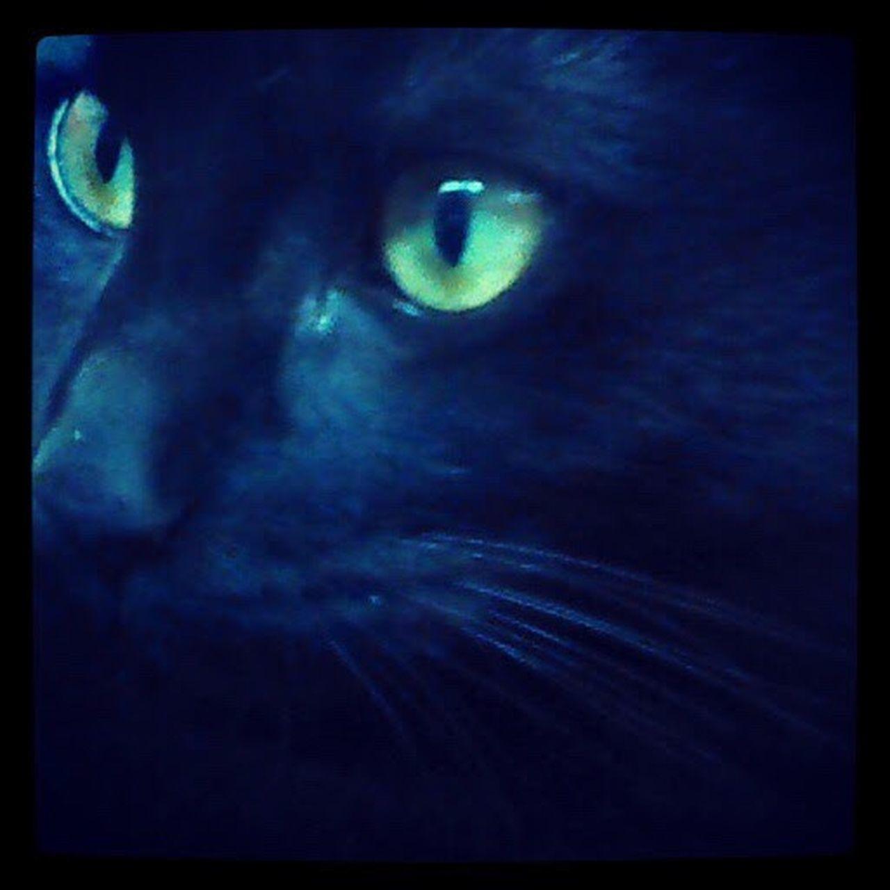 Feline One Animal Close-up Domestic Animals BLackCat Cateyes