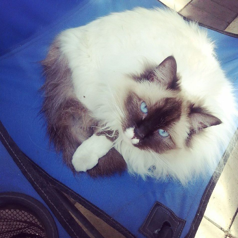 Chilling in the sun! Spring Cats Pets Theadventuresofpuck sun