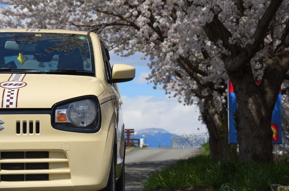 SLR Camera Car Cherry Blossoms On The Road Sky Drive Nature Sakura