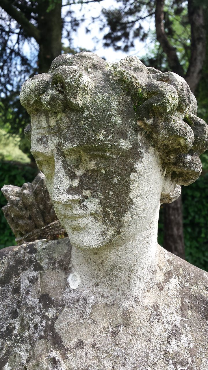 statue, sculpture, art and craft, stone material, no people, day, human representation, tree, cemetery, outdoors, memorial, close-up, moss, tree trunk, gargoyle, nature