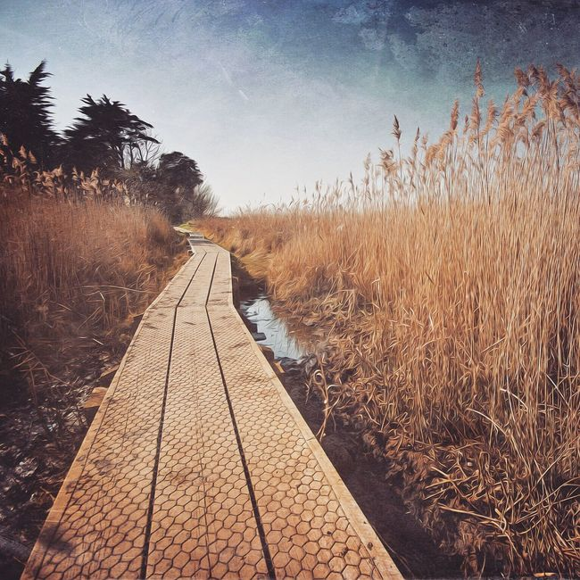 Vanishing Path Walkway The Great Outdoors - 2016 EyeEm Awards Norfolk Reeds Blue Sky Landscape Countryside Great Britain Coastal Path Vanishing Point Beauty In Nature Landscape_photography Landscape_Collection Mextures Tree Landscape Follow The Path Brancaster North Norfolk Paths Beautiful Nature Beautiful Day Lovegreatbritain