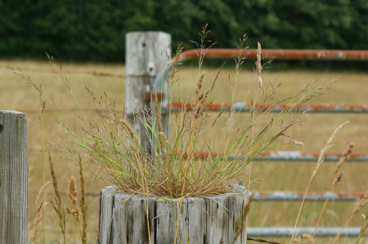Close-Up Of Grass Growing On Wooden Post