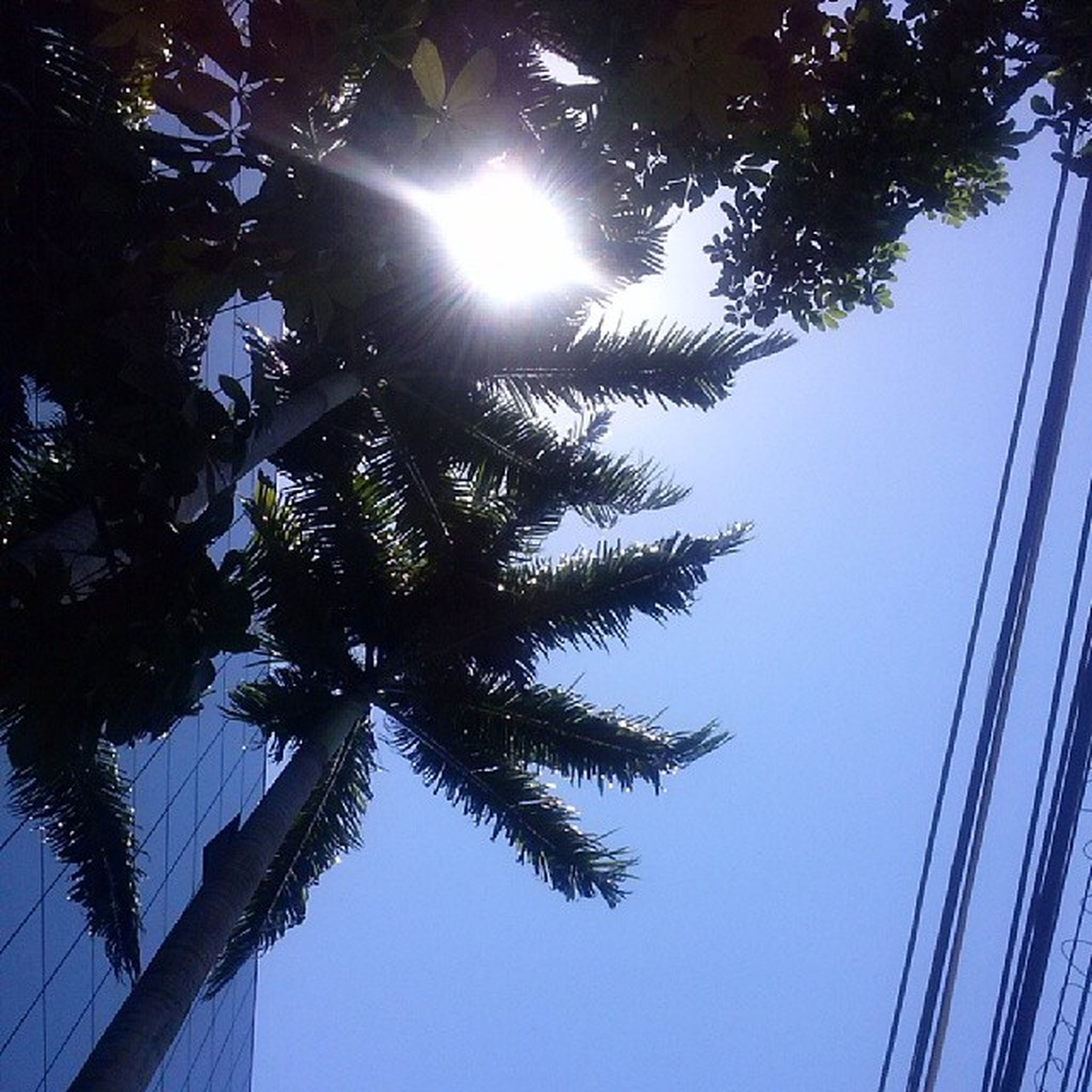 low angle view, tree, branch, clear sky, growth, sun, tranquility, nature, tree trunk, sunlight, beauty in nature, silhouette, sky, palm tree, scenics, tall - high, sunbeam, outdoors, no people, tranquil scene