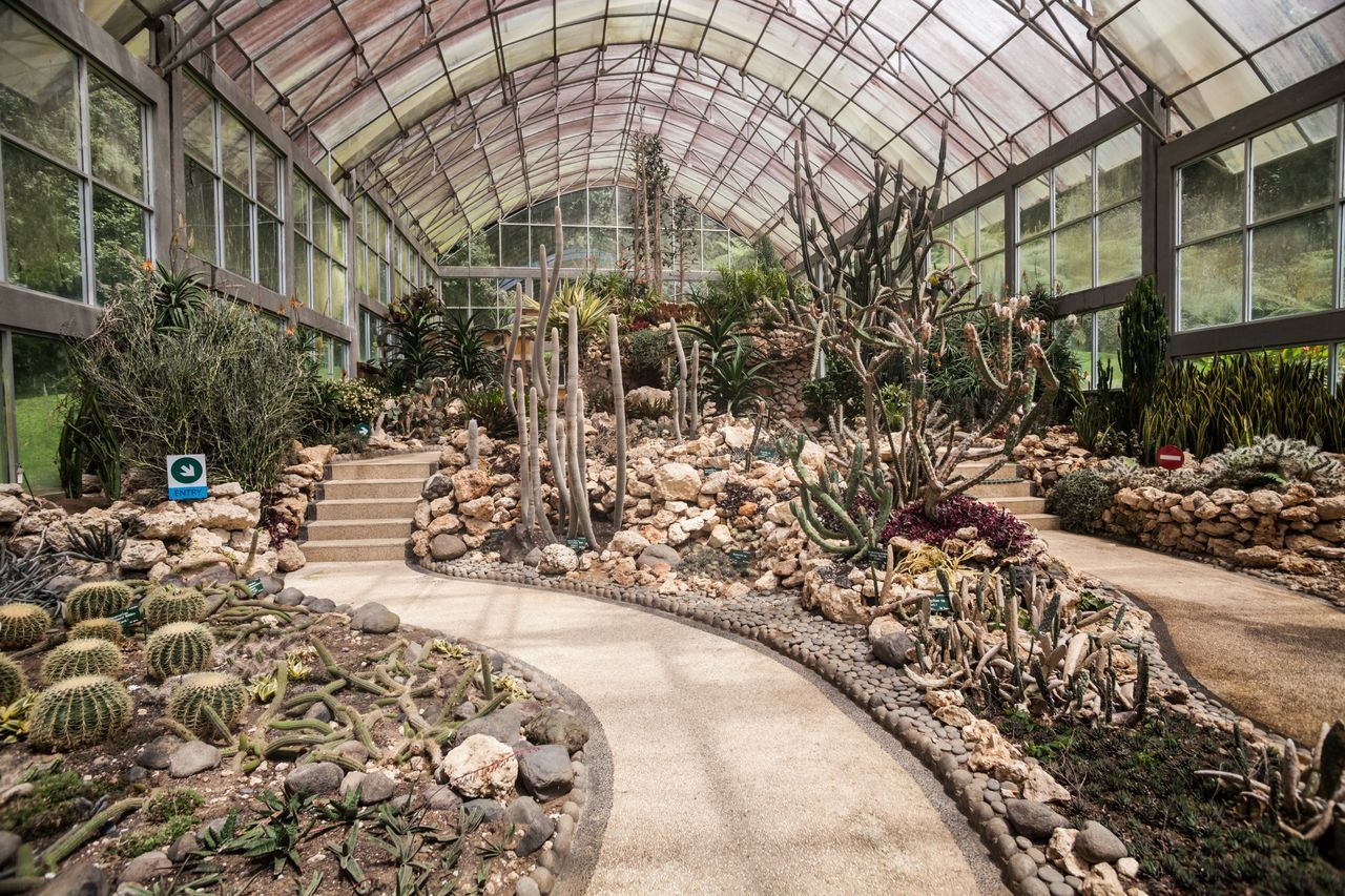 indoors, plant, greenhouse, ceiling, growth, architecture, flower, no people, plant nursery, luxury, day, nature