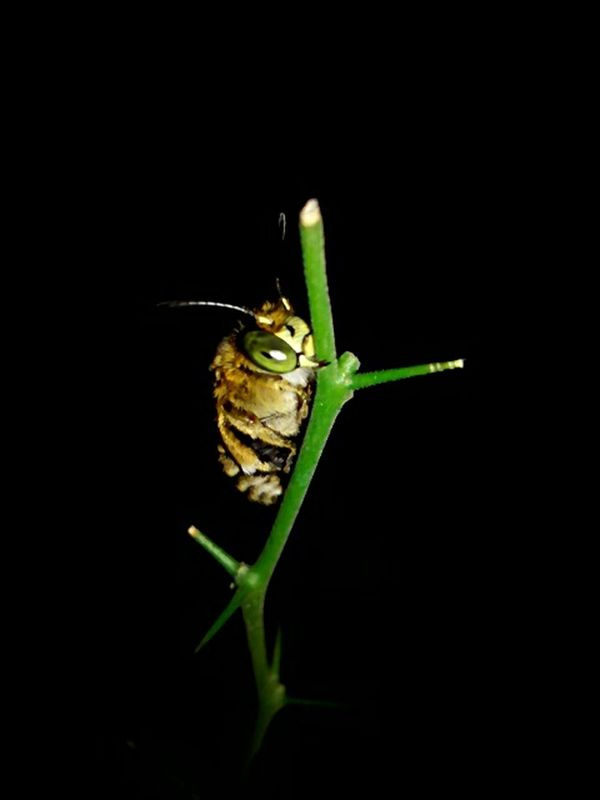 Insect Plants 🌱 Close-up Enjoying Nature Leafs Photography Nature Beauty Animals Nature Night Photography Macro Nature In The Night