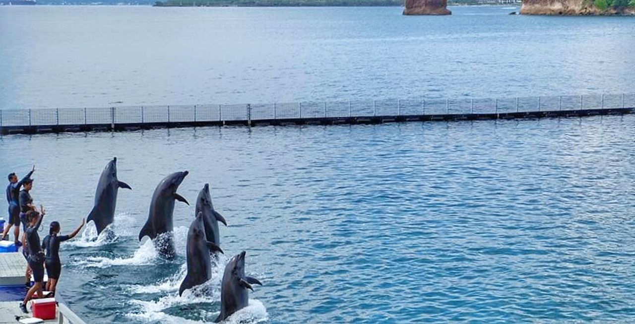 "Nature's Diversities ""..who will win the race?.."" WaterCreature Love Animal PhonePhotography Beauty In Nature Dolphins DolphinShow"