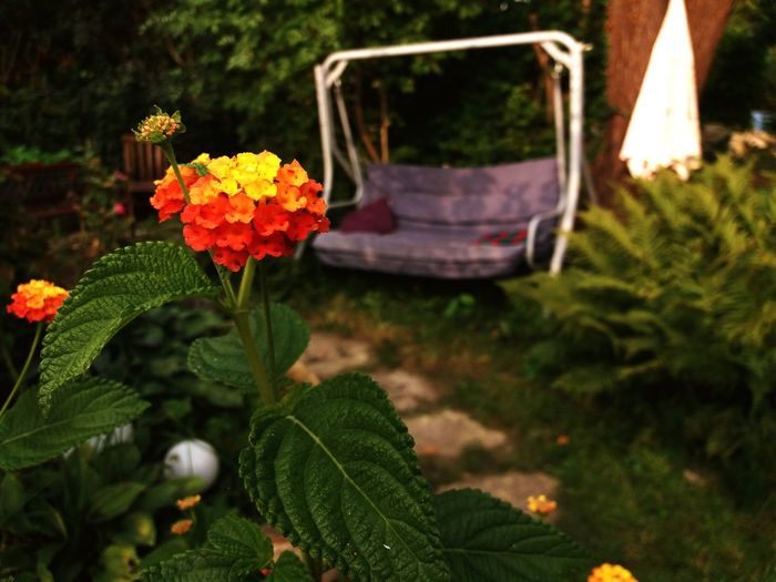 A Day In The Garden Relaxing Summer ☀ Green Color Colors Beautiful Flower Nature Outdoors Freshness No People Day Flower Head