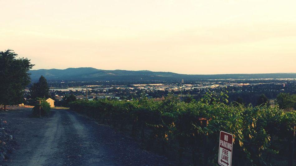 Evening Chill Evening Winery Sunset Washington State Outdoors