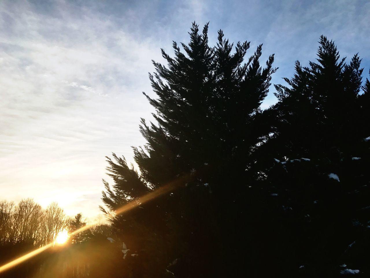 Dawsonville, GA. United States. Nature Trees Sun Sunset Sun Glare Sky Day Outside EyeEmNewHere